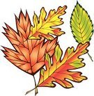 Autumn,Season,fall leaves,Leaf,Nature,Cut Out,Variation,Multi Colored,No People