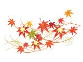 autumn foliage,fulfilling,Autumnal Leaves,Autumn,Plant,Red,Japanese Culture,Leaf,Maple Tree,Lacquered