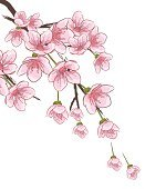Cherry Blossom,Cherry,Blossom,Vector,Springtime,Flower,Drawing - Art Product,Flower Head,Ilustration,Branch,Tree