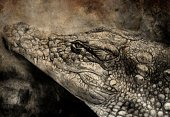 Ilustration,Alligator,Outline,Zoo,Computer Graphic,Hungry,Vector,man-eater,Reptile,Human Jaw Bone,Fang,Large,Crocodile,Animal,Carnivore,Image,Nature,Aggression,Action,Wildlife,Backgrounds