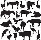 Silhouette,Donkey,Symbol,Calf,Horse,Duck,Animal,Bull - Animal,Farm,Eagle - Bird,Chicken - Bird,Mammal,Rooster,Mule,Set,Black Color,Safari Animals,Wildlife,Zoo,Ox,Crane,Collection,Goose,Africa,Animals In The Wild,Nature,Vector,Pets,Cow,Reptile,Isolated,Ilustration,Zoology,Bird,Parrot,Remote