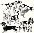 Basset Hound,Dog,Greyhound,Pointer,Hunting,Canine,Friendship,Domestic Animals,Animal,Purebred Dog,Black And White,Hunting Dog,Pets,Set,Collection,Spaniel,Dachshund,Hound