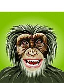 Monkey,Chimpanzee,Animal Mouth,Smiling,Ape,Vector,Africa,Tropical Rainforest,african animal,Animal Teeth,Laughing,Thinking,Nature,Mammals,Animals And Pets,Animal Tongue,Looking Up,Mammal