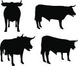 Bull - Animal,Silhouette,Nature,Agriculture,Black Color,Image,White,Domestic Animals,Farm,Milk,Animal,Cow,Backgrounds,Horned,Beef,Livestock,Cattle,Design,Isolated,Merchandise,Vector,Collection,Ilustration,Female Animal,Calf,Standing