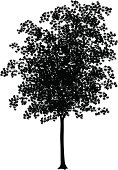 Maple Tree,Tree,Silhouette,Black Color,Vector,Deciduous Tree,Tree Trunk,Leaf,Outline,foliagé,Branch,Ilustration,Environment,Plant,Part Of,Plants,Nature,Nature,Computer Graphic