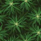 Marijuana,Marijuana Plant,Backgrounds,Leaf,Hashish,Abstract,Textured Effect,Textile,Vector,Floral Pattern,Green Color,Pattern,Plant Pod,Weed,ganja,Narcotic,Forest,foliagé,Backdrop,Grass,Textured,Nature,Drawing - Art Product,Fu,Joint,Repetition,Seamless,Plant,Group of Objects,Addiction,Herbal Medicine,Tree,Wallpaper Pattern,Ilustration,Symbol,Material,Herb