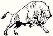 European Bison,Animal,Zoology,Hoofed Mammal,Horned,Nature,Male Animal,black white,Side View,One Animal,Furious,Wildlife,Aggression,Vertebrate,continent,Motion,Mammal,Animals In The Wild,Herbivorous,Strength,Power,Black And White,Anger