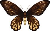 Brown,Lepidoptera,Ornithoptera Alexandrae,Papua New Guinea,Vector,Forest,Accuracy,Flying,Backgrounds,Clipping Path,Arthropod,Insect,Biology,Animal