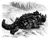 Drawing - Art Product,Print,History,Pencil Drawing,Ilustration,Engraving,Black And White,Classical Style,Retro Revival,Thorn,Devil,horridus,Thorny Dragon,Cultures,Art,Isolated On White,Nature,Science,Lizard,Animal,Animal Themes,Reptile,Old-fashioned,Obsolete,Antique,19th Century Style,Painted Image,Dragon,Engraved Image,Thorny Devil Lizard,Victorian Style,Sketch,Isolated,Old