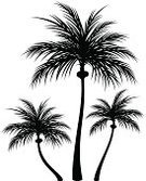 Coconut Palm Tree,Beach,Nature,Coconut,Tree,Back Lit,Palm Tree,Silhouette