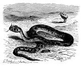 Painted Image,19th Century Style,Classical Style,Sketch,Isolated,Horned,Horned Desert Viper,Victorian Style,History,Print,cerastes,Nature,Desert,Black And White,Ilustration,Drawing - Art Product,Pencil Drawing,Viper,Science,Retro Revival,Animal Themes,Animal,Art,Isolated On White,Snake,Cultures,Reptile,Old-fashioned,Engraving,Sahara Desert,Engraved Image,Old,Antique,Obsolete,Cerastes Cerastes