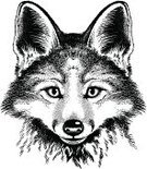 Dog,Engraved Image,Fox,Tattoo,Etching,Black Color,Sketch,Orange Color,Wildlife,Red Fox,Wolf,Canine,Nature,Animal Head,Zoo,Portrait,Print,Fur,Folk Lore,Design,Mask,Mystery,Conspiracy,Fur,Symbol,Candid,Costume,Coat,Animals Hunting,Scavenging,Werewolf,Creativity,Arctic,Art,foxy,Ilustration,Fine Art Portrait,Anthropomorphic Face,Animal,Art Product,Animal Eye,Silk Screen,Red,Mythology,Painted Image,Isolated,Pen And Ink,Animals In The Wild,Vector,Drawing - Art Product