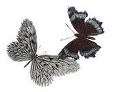 Butterfly - Insect,Brushed,Nature,Lighting Technique,Design,Sparse,Shape,Painted Image,Digitally Generated Image,Multi Colored,Abstract,Sphere
