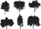 Tree,Silhouette,Vector,Black Color,Isolated,White,Ilustration,Nature,Nature Backgrounds,Isolated Objects,Isolated On White,Season,Nature
