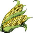 Corn On The Cob,Retro Revival,Old-fashioned,Food,Corn - Crop,Print,Corn,handdrawn,Cooking,Symbol,Computer Icon,Vegetarian Food,Organic,Dieting,Drawing - Activity,Ilustration,Color Image,Carving - Craft Activity,Green Color,Oriental Style Woodblock Art,Freshness,Healthy Lifestyle,Healthy Eating,Healthcare And Medicine,Sweetcorn,Groceries,Vector,Maze,Woodcut,Carving - Craft Product,Food And Drink,Vitamin Pill,Nutritional Supplement,Drawing - Art Product,Raw Food,Isolated,Salad,Vegetable,Sweet Food,Etching