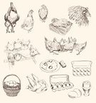 Chicken Coop,Ilustration,Farm,Old-fashioned,Livestock,Poultry,Sketch,Chicken - Bird,Vector,Set,Basket,Animal Egg,Rural Scene,Cockscomb,Rooster,Fried Egg,Pride,Agriculture,Profile View,Cockerel,Young Bird,Population Explosion,Animal,Bird,Baby Chicken,Hen,Eggs,Collection,Industry,Scrambled Eggs
