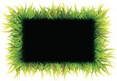 Meadow,Long,Set,Nature,Plate,Summer,Growth,Grass,Vector,Ilustration,Green Color,Short - Length