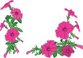 Image,Ilustration,Flower,Red,Petunia,Summer,Vector,Group of Objects,Isolated,Pencil Drawing,Corner,Collection,Purple,Flower Head,Blossom,Bouquet,Gardening,Set,Corner,Garland,Angle,Flower Bed,Nature,Green Color,Petal,Leaf,Plant,Floral Pattern,Drawing - Activity