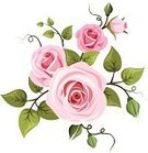 Rose - Flower,Vine,Victorian Style,Ilustration,Formal Garden,Pink Color,Swirl,Branch,Green Color,Vector,Bud,White Background,Old-fashioned,White,Leaf,Flourish,Beautiful,Backgrounds,Design,Ornate,Flower Head,Decoration,Curve,Summer,Tendril,Retro Revival,Growth,Isolated,Flower,Plant,English Culture,Nature,Petal,Design Element,Bouquet,Curled Up,tea-rose,Style,Blossom