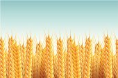 Straw,Bread,Seed,Barley,Field,Wheat,Seamless,Farm,Blue,Vector,Summer,Ripe,Horizontal,Gold Colored,Season,Nature,Agriculture,Cultivated,Cereal Plant,Sky,Landscape,Backgrounds,Crop,Plant,Rural Scene,Ilustration,Pattern,Growth,White,Yellow,Rye