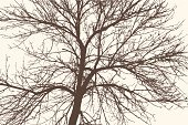 Silhouette,Branch,Nature,Symbol,Springtime,Season,Outdoors,Stem,Tree,Twig,Tree Trunk