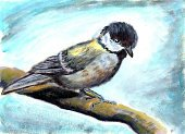 Branch,Animal,Multi Colored,Pattern,Wildlife,Ink,Ilustration,Cute,Nature,Backgrounds,Bird