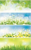 Dandelion,Vector,Backgrounds,Chamomile Plant,Sky,Chamomile,Summer,Springtime,White,Defocused,Yellow,Close-up,Design,Branch,Horizontal,Placard,Flower,Leaf,Daisy,Birch Tree,Landscape,Field,Day,Sunlight,Plant,Scenics,Meadow,Easter,Banner,Green Color,Nature,Sun,Label,Environment,Tree,Green Background,Season,Ilustration,Illuminated,Grass