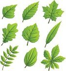 Ilustration,Botany,Collection,Forest,EPS 10,Plant,Park - Man Made Space,Tree,Abstract,Nature,Leaf,Season,Vector