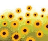 Sunflower,Four Seasons,Abstract,Flower,Backgrounds,Imagination,Decoration,Season,Formal Garden,Paintings,Springtime,Freedom,Ornamental Garden,Multi Colored,Field,Tranquil Scene,Nature,Landscape,Spiral,Concepts,Dreamlike,Style,Nature,Elegance,Flowers,Beauty In Nature,Creativity,Plants,Landscaped,Beauty,Curve,Nature Abstract,Color Image,Bright,Ideas,Beautiful