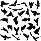 Bird,Black Color,Group Of Animals,Concepts,Ideas,Symbols Of Peace,Symbol,White,Peace Sign,Smooth,Wildlife,Silhouette,Sky,Pigeon,Animal,Ilustration,Flock Of Birds,Allegory Painting,Sign,Dove - Bird,Pencil Drawing,Love,Wing,Flying,Vector,Posing,Decoration,Remote,Isolated,Design Element,Nature