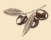 Olive Tree,Olive,Engraved Image,Food,Etching,Sketch,Engraving,Decoration,Ripe,Bush,Lush Foliage,freehand,Branch,Ingredient,Leaf,Monoprint,Back Lit,Design Professional,Nature,Part Of,Computer Graphic,Painted Image,Plant,Design Element,Ilustration,Outline,Tree,Black Color,Shape,Gourmet,Cooking,Curve,Vector,Pattern,Symbol,Crop,Art,Riding Crop,Mediterranean Countries,Drawing - Activity,Floral Pattern,Drawing - Art Product,Periodic Table,Factory,Cutting,Design,Silhouette,Flower,Contour Drawing,Doodle,Mediterranean Sea