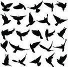 Bird,Vector,Silhouette,Flying,Dove - Bird,Flock Of Birds,Black Color,Pigeon,Part Of,Sign,Remote,Posing,Isolated,Wildlife,Decoration,Allegory Painting,Sky,Love,Ilustration,Feather,Freedom,Peace Sign,Symbols Of Peace,White,Animal,Nature,Concepts,Ideas,Group Of Animals,Wing,Smooth,Symbol,Wedding