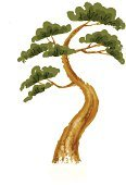 Leaving,Nature,Branch,Tree,Pine,Color Image,Clip Art,Art Product