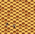 Honeycomb,Honey Bee,Bee,Gold Colored,Repetition,Insect,Ilustration,Yellow,Backgrounds,Hexagon,Seamless,Vector,Pattern,Honey