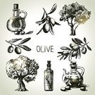 Olive Tree,Olive,Sketch,Sketch Restaurant,Ilustration,Old-fashioned,Fruit,Tree,Vegetable,Retro Revival,Symbol,Computer Icon,Domestic Kitchen,Design,Bottle,Agriculture,Cooking Oil,Vector,Freshness,Computer Graphic,Leaf,Painted Image,Pencil,Doodle,Collection,Pencil Drawing,Branch,Sauces,Drawing - Art Product,Organic,Set,Cooking,Old,Nature,Food,Isolated,Drawing - Activity