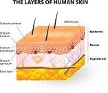 Human Skin,Diagram,Anatomy,Dermatology,Skin Cancer,Healthcare And Medicine,Melanocyte,Leaf Epidermis,Human Cell,Beauty Treatment,Keratinized Cell,Melanin,Cancer,Powder Paint,Vector,Cross Section,Plan,Science,pigmented,Medical Exam,Macro Film,People,cut-away