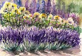 Lavender,Watercolor Painting,Nature,Flower,Delphinium,Beauty Product,Flower Bed,Grass,Growth,Multi Colored,Gardening,Tranquil Scene,Landscaped,Hydrangea,Cultivated,Yellow,Lawn,Herb,Rose - Flower,Summer,Color Image,Lavandula Anquitifolia,Bed,Flower Head,Blossom,Painted Image,Scented,Green Color,Aromatherapy,Blossoming,Blue,Park - Man Made Space,Herbal Medicine,Lavender Coloured,Springtime,Perennial,Colors,Plant,Ilustration