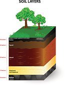 Dirt,Layered,Cross Section,Land,Geology,Rock - Object,Horizon,Stone,Underground,Clay,Diagram,Education,Vector,Mineral,Bedrock,Pattern,Grass,Science,Nature,Flood,orders,subsoil,Humus Soil,Material,Organic,Pastry Crust,Sand,topsoil