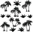 Palm Tree,Silhouette,Black Color,Coconut Palm Tree,Nature,Tropical Rainforest,Forest,Tropical Climate,Vector,Tree,Leaf,Evergreen Tree,Isolated,Environment,Computer Graphic,Woodland,Flower,Bush,Plant,Landscape,Coco,Branch,Growth,Climate,botanic,White,Sub-tropical Climate,Black And White,Summer,Cut Out,foliagé,Lush Foliage,Scenics,Beach,Outdoors,Set,Outline,Floral Pattern,Frond,Grass