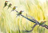 Hummingbird,Painted Image,Beauty In Nature,Clip Art,Bird,Ilustration,Nature,Color Image