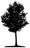 Tree,Outline,Forest,Isolated,Branch,Vector,Ilustration,Illustrations And Vector Art,Tracing,Woodland