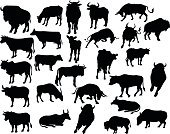 Silhouette,American Bison,Buffalo - David Bitton,Cow,European Bison,Yak,Calf,Bull - Animal,Farm,Beef,Ox,Hoofed Mammal,Astronomy,Mammal,Large,Animal,Ranch,gaur,Herd