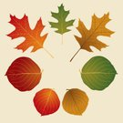 Leaf,Autumn,Oak,Leaf Vein,Vacations,Animal Vein,Christmas,Sycamore Tree,Maple,Red,Green Color,Ilustration,Orange Color,Ornate,Holiday,Vector Florals,Brown,Travel Destinations,Halloween,Holidays And Celebrations,Illustrations And Vector Art,note card,Thanksgiving