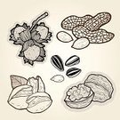 Pistachio,Peanut,Ilustration,Hazelnut,Walnut,Nutshell,Seed,Sketch,Collection,Healthy Eating,Doodle,Nature,Cartoon,Food,Drawing - Art Product,Hazel Tree,Ingredient,Vector,Fruit,Image,Cashew,Raw Food,Set,Vegetarian Food,Design Element,Sunflower,Snack,Gourmet