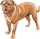 Mastiff,Purebred Dog,Animal,Animal Body,Serious,Tail,Power,Vector,Sketch,Short Hair,Sadness,Muscular Build,Bordeauxdog,Tranquil Scene,Ilustration,Standing,Molosser,Black Color,Large,Bordeaux Mastiff,French Mastiff,Pets,Dog,Molossoid