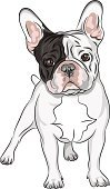 French Bulldog,Ilustration,Dog,Bulldog,Small,Power,Muscular Build,Animal,Pets,White,Friendship,Sketch,Gray Hair,Strength,Purebred Dog,Black Color,Animal Ear,Vector,Brown,France,Folded,Short Hair,frenchie,Cute