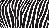 Black And White,Camouflage,Wildlife,Backgrounds,Zebra,Safari Animals,Africa,Pattern,Zebra Print,Vector,Contrasts,Black Color,Exoticism,White,High Contrast,Fur,Striped,Textured Effect,Monochrome,Ilustration,Fur,Animal Print,Textured,Abstract,Animal,Close-up