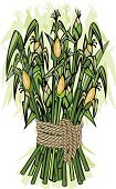 Corn,Harvesting,Crop,Stem,Seed,Autumn,Silhouette,Ilustration,Agriculture,Vector,Painting,Straw,Art,Symbol,Nature,Drawing - Art Product,Backgrounds,Candid,Clip Art,Ornate,Food,Celebration,Botany,Textured,Outline,Decoration,Design,Healthy Eating,Yellow,Plant,Ripe,Part Of,Shape,Plants,Nature,Gold Colored,Holiday,Shiny,Rural Scene,Decor,Illustrations And Vector Art,Holidays And Celebrations,Thanksgiving,Season,Branch,Growth,Contour Drawing,Organic,Cultures