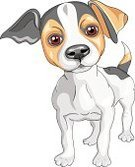 Young Animal,Black Color,Jack Russell Terrier,Terrier,Small,Purebred Dog,Cute,Sketch,Dog,Cheerful,Strength,Red,Fun,Pets,Puppy,White,Serious,Tail,Vector,Ilustration,Brown,Humor,Friendship,Spotted,Short Hair,Intelligence,Animal