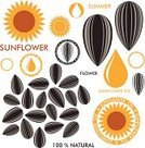 Sunflower Seed,Sunflower,Seed,Flower,Set,Sign,Cooking Oil,Design Element,Computer Icon,Abstract,Black Color,Symbol,Vector,Crop,Isolated,Orange Color,Exoticism,Label,Drop,Old-fashioned,Summer,Food,Vegetable,Yellow